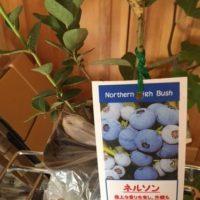 果樹を植える 家庭菜園・協生農法