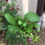 長岡市 家庭菜園・協生農法