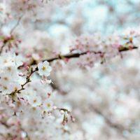 長岡市 リバース 4月の定休日