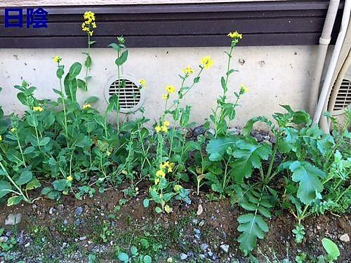 日陰 家庭菜園
