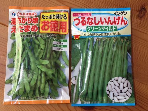 春蒔きの種 マメ科 家庭菜園 協生農法風