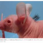 毛髪再生マウス