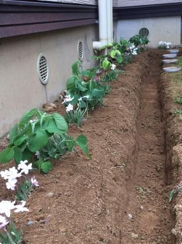 日向3(増設)茶豆