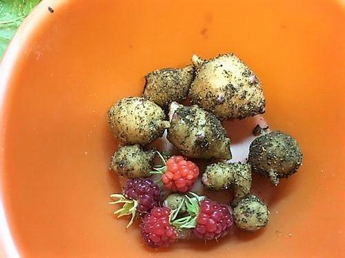 菊芋とラズベリー