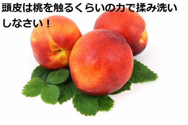 頭皮は桃を触るくらいの力で揉み洗いしなさい!