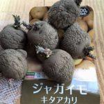 ジャガイモ キタアカリ