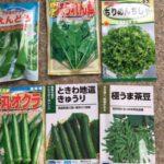 野菜の種を蒔く