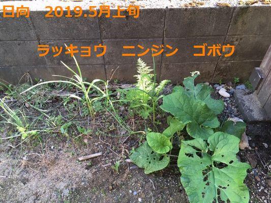 2019.5上旬 日向