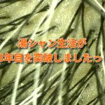 湯シャン生活が3年目突破!