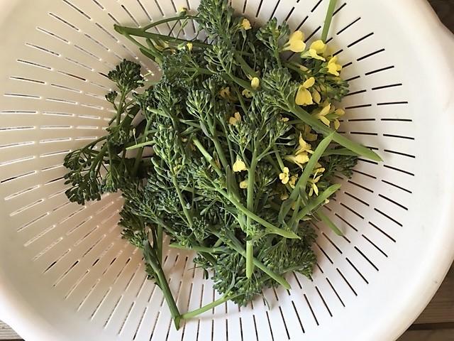 茎立ブロッコリー