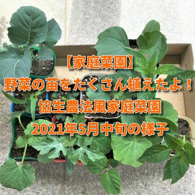 【家庭菜園】野菜の苗をたくさん植えたよ!協生農法風家庭菜園2021年5月中旬の様子