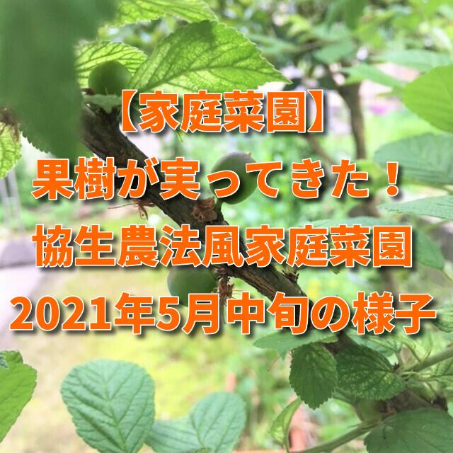 【家庭菜園】果樹が実ってきた!協生農法風家庭菜園2021年5月中旬の様子