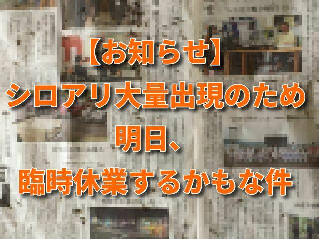 【お知らせ】シロアリ大量出現のため臨時休業するかもな件