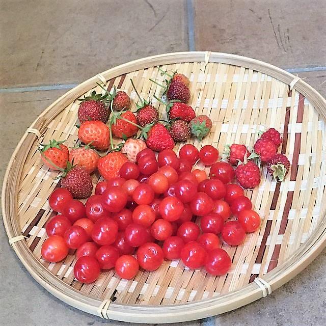 イチゴとラズベリーと山桜桃の収穫っ!