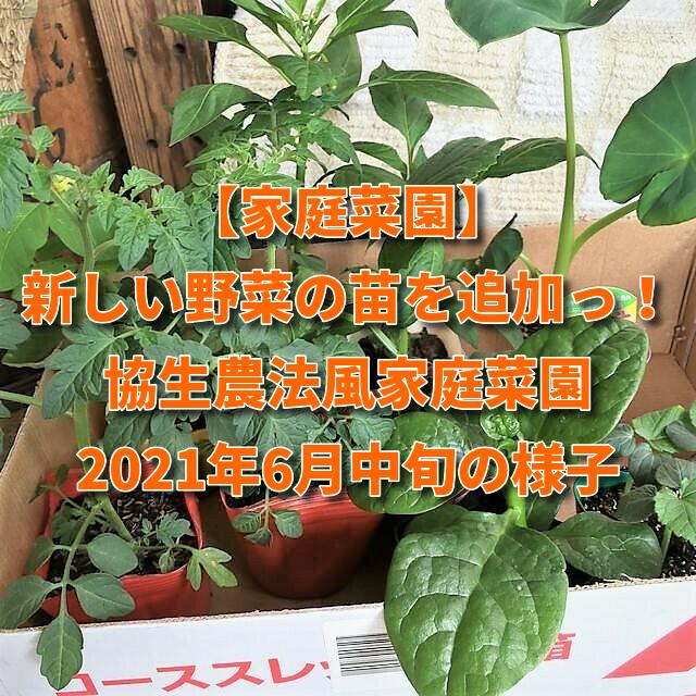 【家庭菜園】新しい野菜の苗を追加っ!協生農法風家庭菜園2021年6月中旬の様子