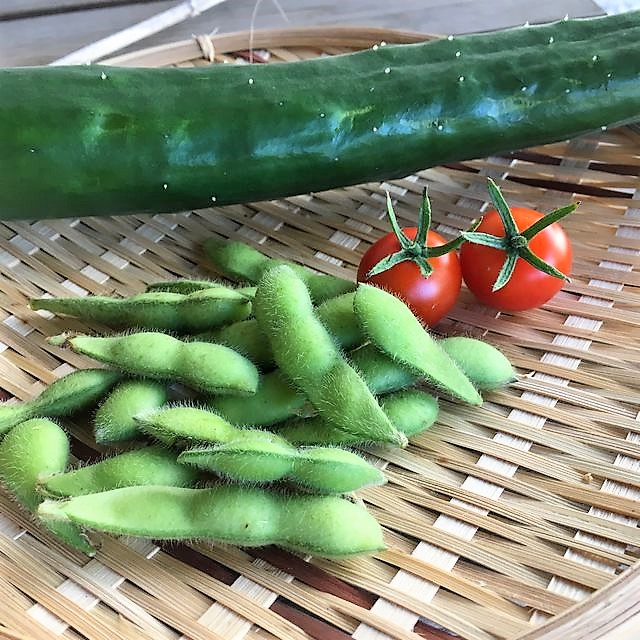 キュウリとミニトマトと枝豆