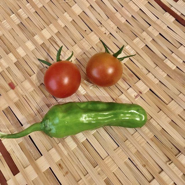 ミニトマトとシシトウ